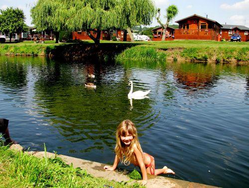 Stratford-upon-Avon, UK, England, Camping, Swans,Shakespeare, RSC