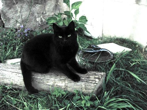 black cat in Sweden