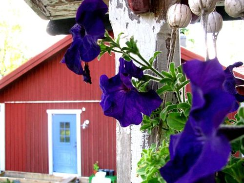 Beautiful cottage and flower sweden