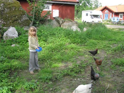 girl feeding chickens on farm in sweden, family travel