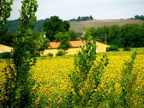 Beautiful French countryside on our European road trip filled with sunflowers