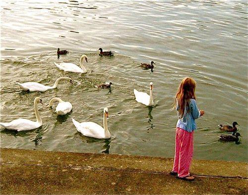 PJ clad kid feeds 7 swans in the morning before breakfast in Paris on Seine