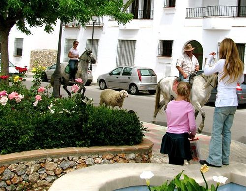 Sheep, young girls, horses in Spain, globe trotting, location independent, global nomad kids! TCK,