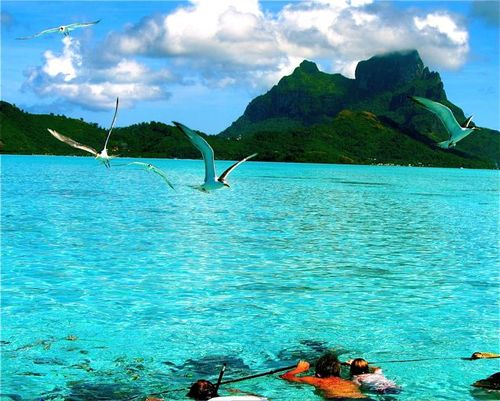 Bora Bora lagoon swimming with sharks & manta rays
