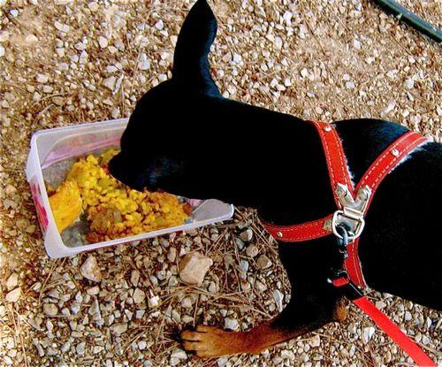 dog eating paella!
