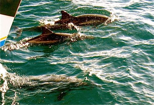 dolphins on Na Pali coast