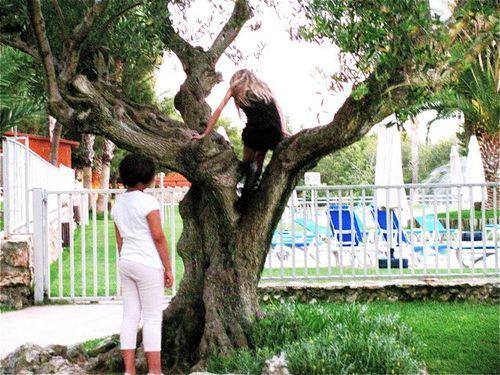 tree climbing explorations in barcelona resort