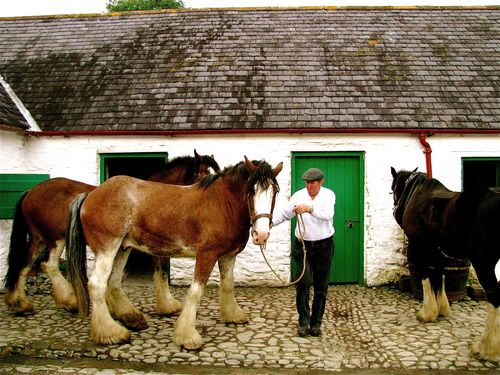 exploring roots in Ireland, traditional farm and horses Kilarney