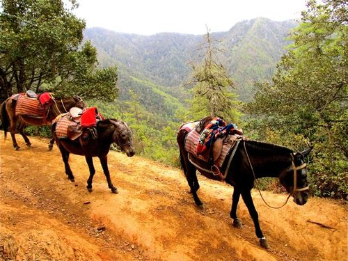 Bhutan horses on Tiger's Nest trail