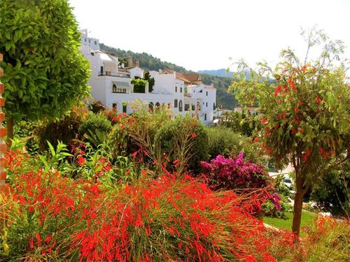 late spring in bloom in Andalusia