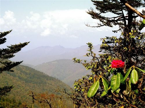 travel to Bhutan for awesome landscapes