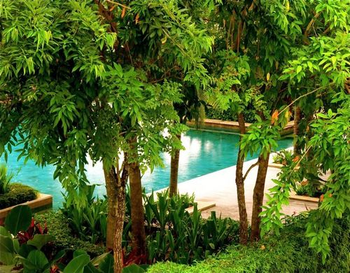 Beautiful tropical green foliage and pool