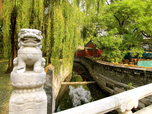 Loving the natural beauty and symbolism in China