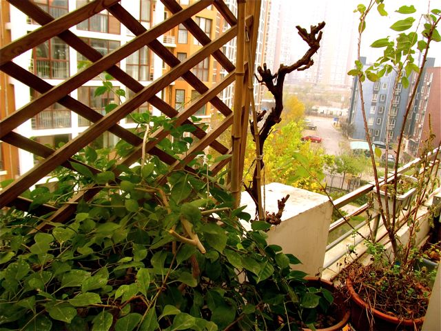 Beijing homestay garden on roof top terrace
