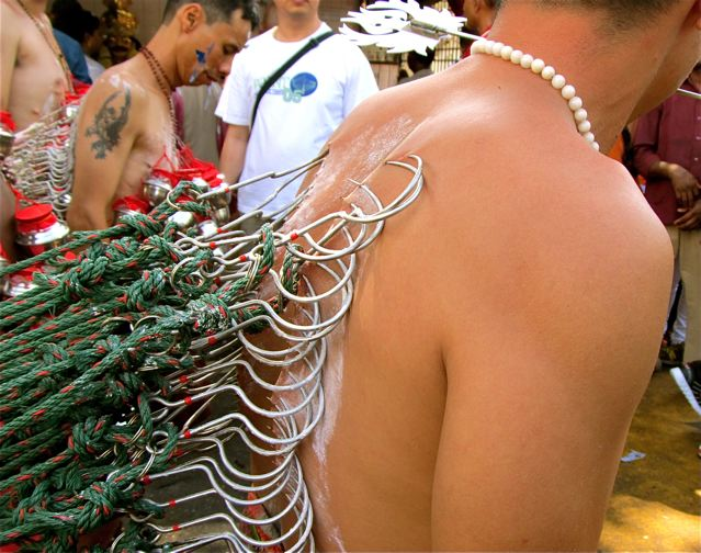 Thaipusam festival hooks pierced into back pulling large alter in trance