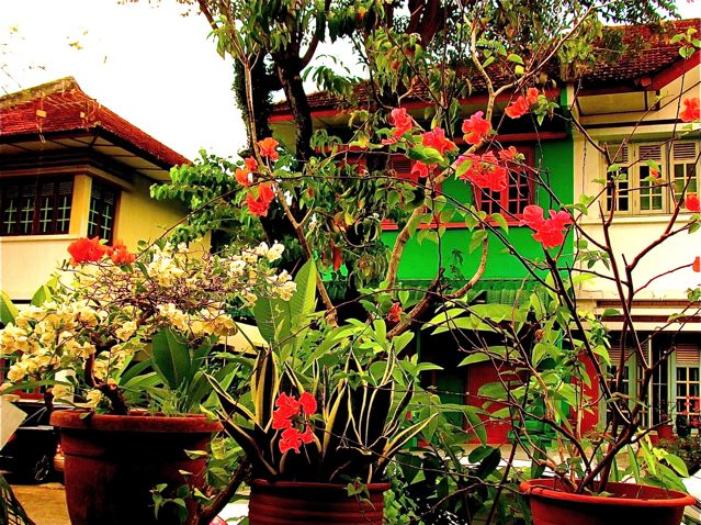 tropical flowers and ancient architecture