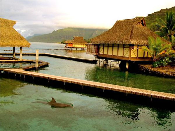 luxury overwater bungalows in Tahiti and dolphins