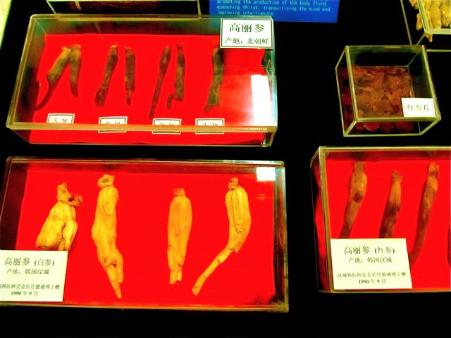 Traditional Chinese Medicine in China - healing herbs from TCM Museum Beijing