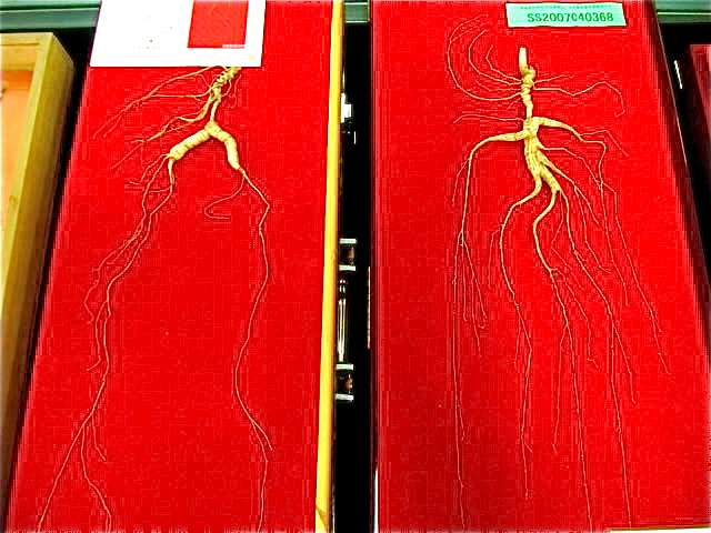 Ginseng - Chinese medicine in China
