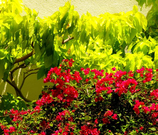 bright sun, tropical plants
