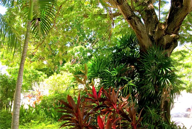Grounding - Earthing - Nature = Better Health