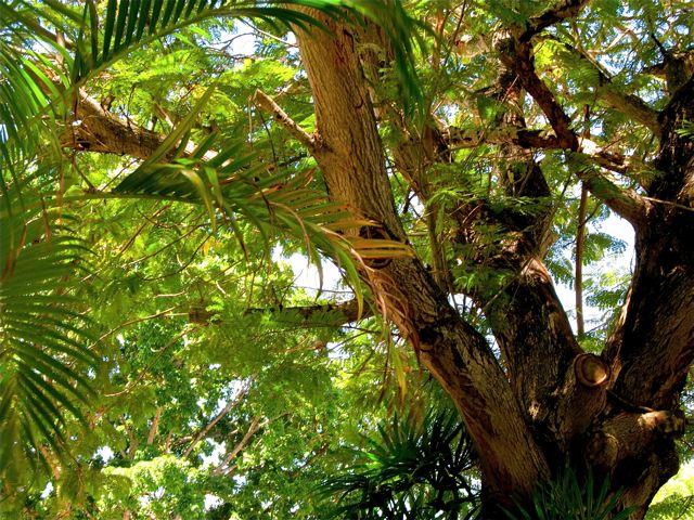 my favorite tree Grounding - Earthing - Nature = Better Health