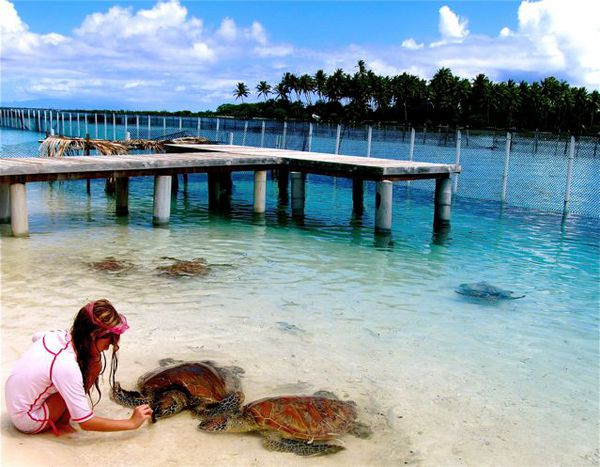 Travel kid Mozart feeding turtles in Bora Bora