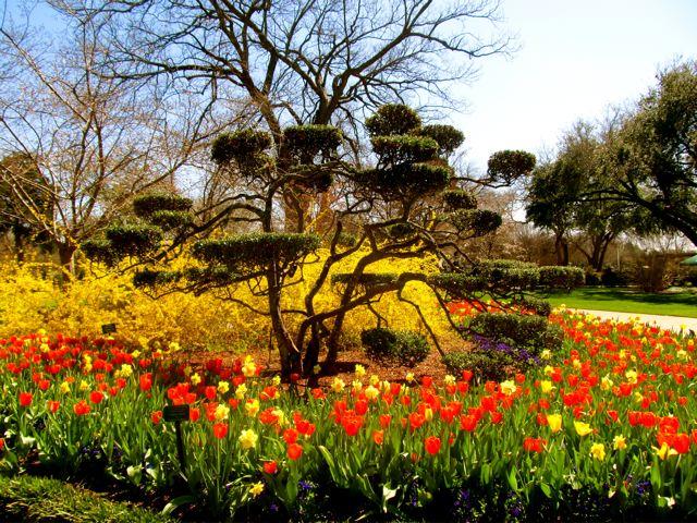 Bloom festival at Dallas Arboretum