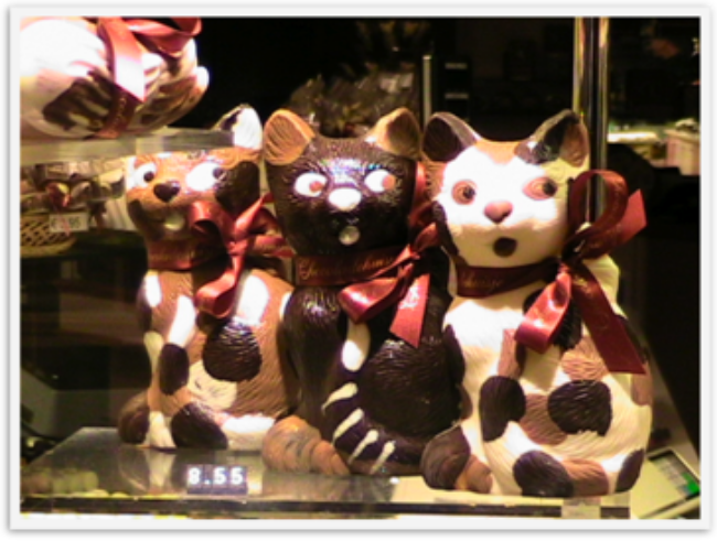 best chocolate in the world - cats