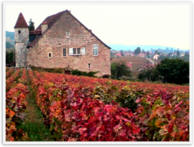 Stunning Fall Colors Around the World! France Vineyard