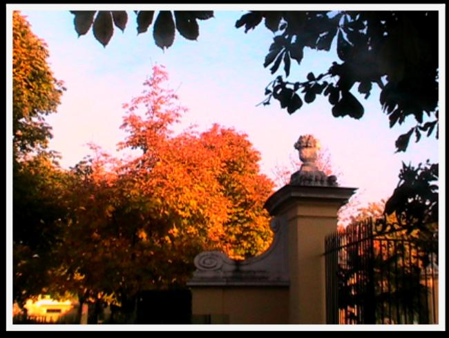 Stunning Fall Colors Around the World! Vienna Zoo