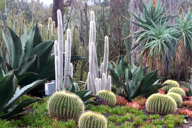 Visiting The Huntington Botanical Gardens In The Desert Garden