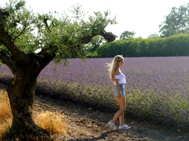 lavender field, olive tree and beautiful girl