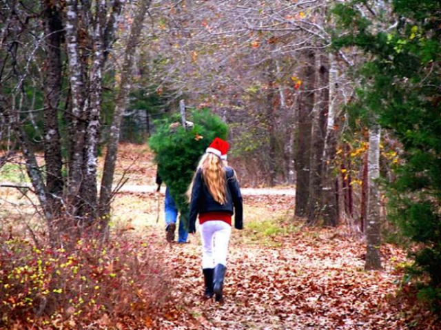 Happy Holidays and Soultravelers3 update. Cutting our own Christmas tree