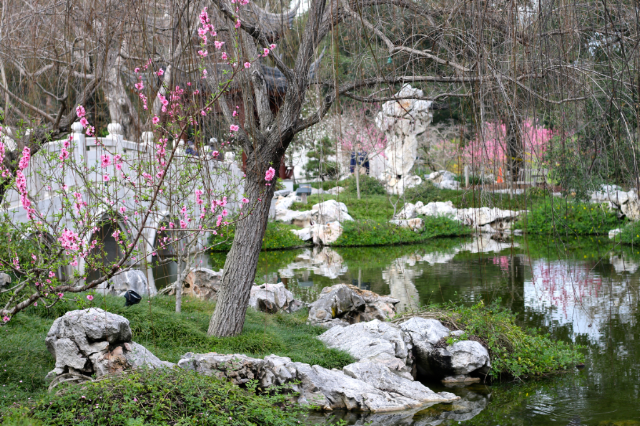 Exploring the Chinese garden while Visiting the Huntington Botanical Gardens in Pasadena