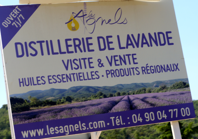 where to go visit lavender fields in Provence