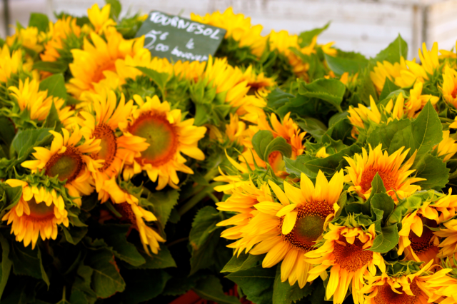 sunflowers at Best Provence Farmers' Market  - in the Luberon