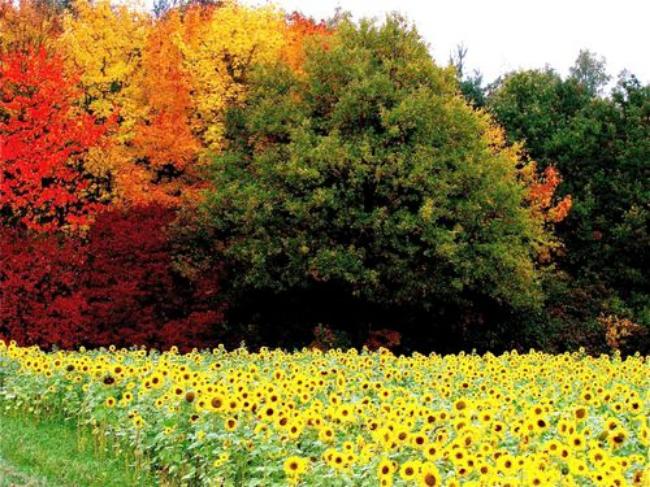 Stunning Fall Colors Around the World!