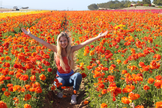 California's Super Bloom and Spring Trip to Flower Fields