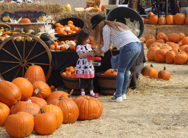 Pumpkins, Candy Apples, Halloween Family Fun!